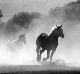 Pferde gestützte Therapie